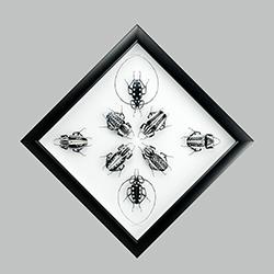 Black and white composition SITO