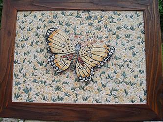 Dario Sogmaister_foto_mosaico farfalla